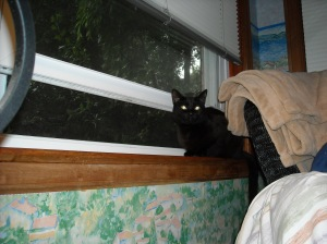Jha in window